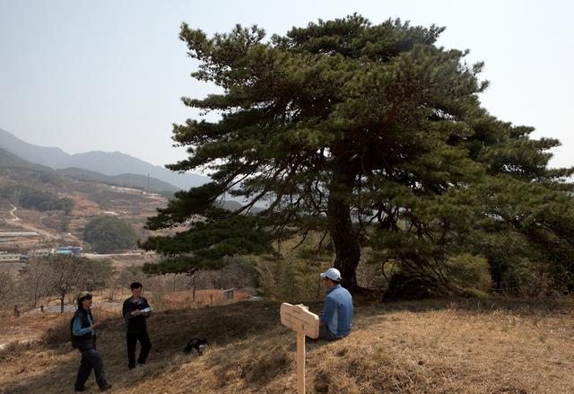 마천 장항마을 당산소나무.jpg