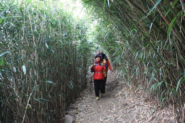 5.비렁길 대나무숲길IMG_9772.JPG