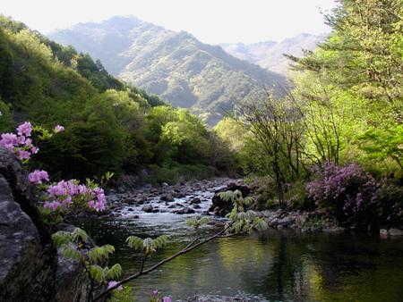 봄_철쭉.jpg