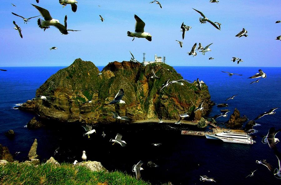 갈매기 새끼 번식기에 어미 갈매기들이 바다를 날아오르며 분주히 먹이를 찾고 있다.