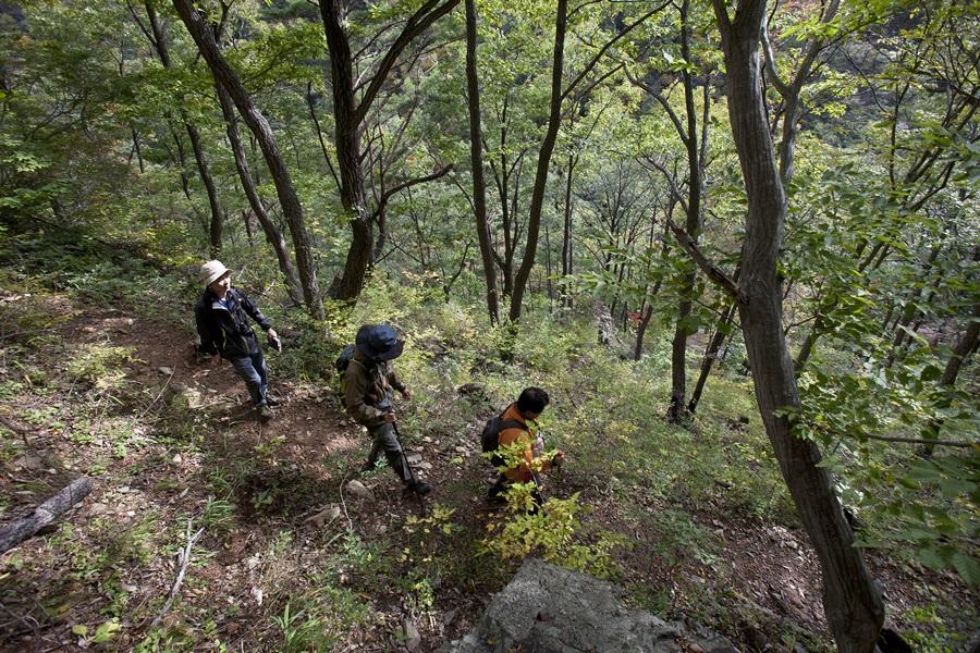 내연산숲길은 계곡 옆 숲길로 내내 걸어간다. 걸으면서 들리는 건 물소리와 새소리 등 자연의 소리뿐이다.