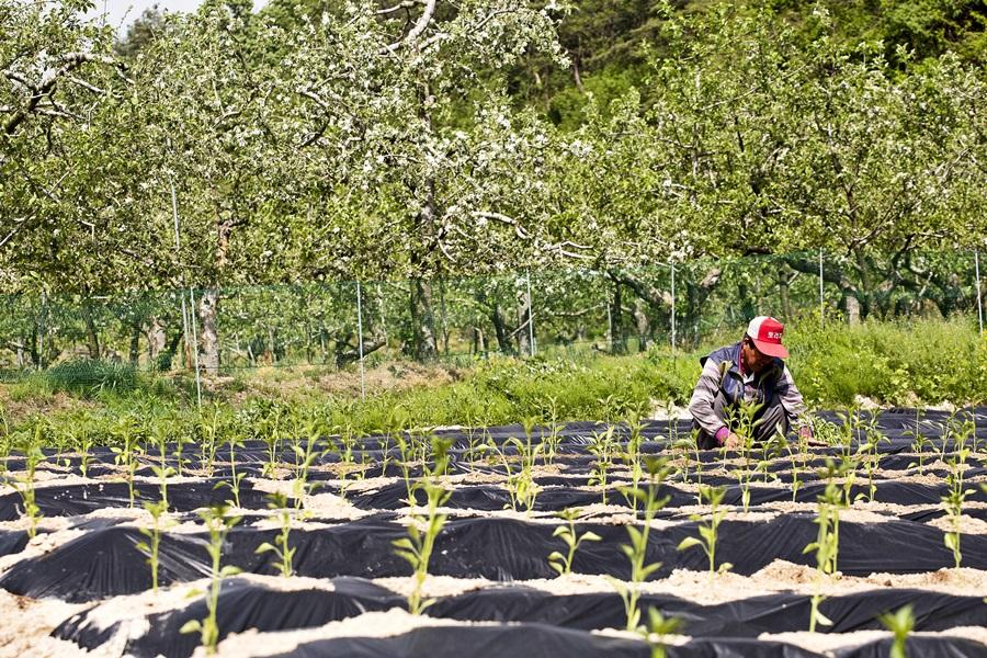 소백산자락길 옆에서 한 농부가 열심히 밭일을 하고 있다.