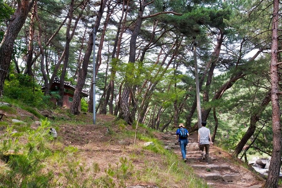 석천계곡 따라 올라가는 솔숲길은 가는 길 내내 기묘한 노송과 함께 한다. 옛날 도깨비들이 경치에 반해 무리를 지어 내려와 놀았다고 전한다.
