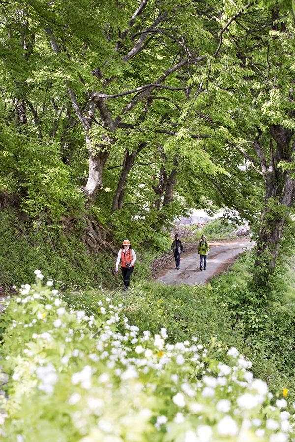 녹음이 서서히 우거지고, 꽃이 만발한 소백산자락길을 걷고 있다.