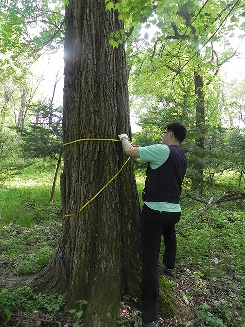 아카시나무의 생장모습을 확인하고 있다.