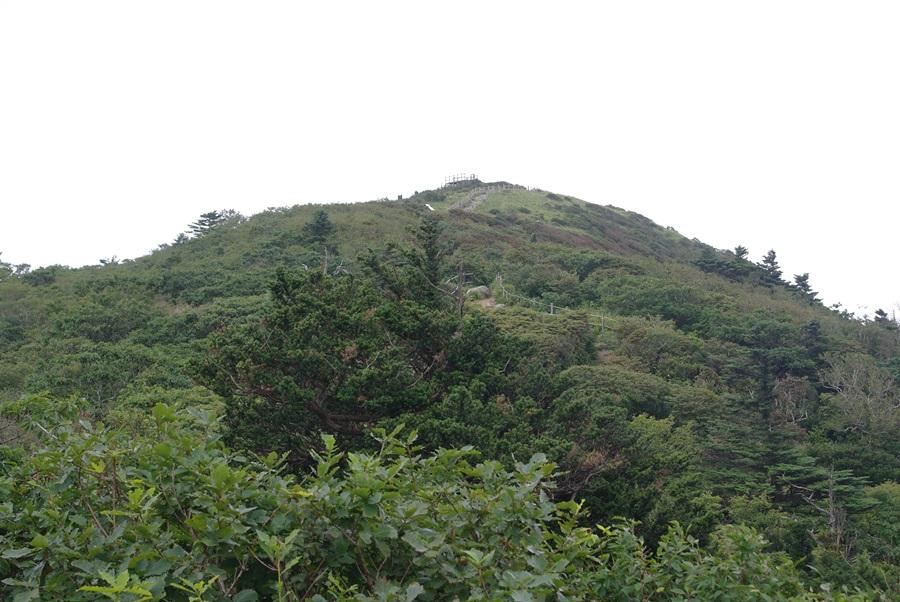 케이블카 내리는 설천봉 주변에는 구상나무가 군락을 이룬 가운데 중간 중간에 주목도 보인다.
