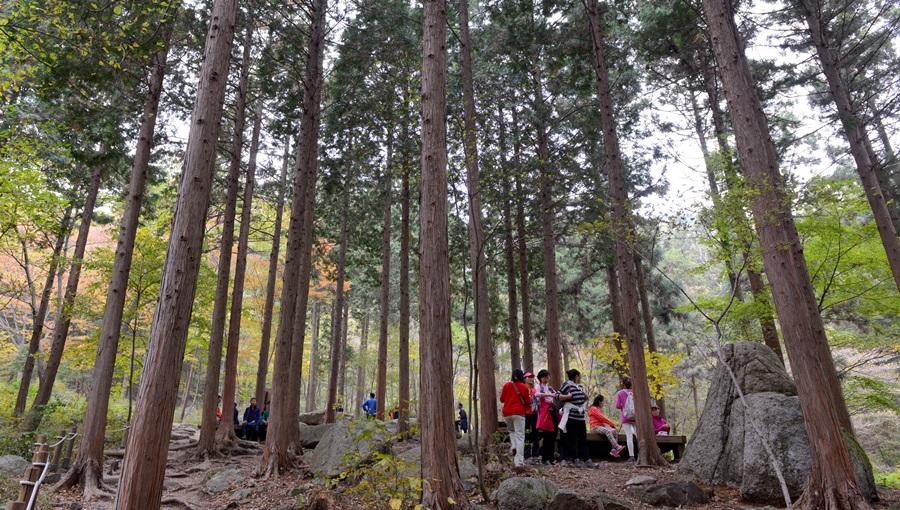 숲을 찾는 사람이 날이 갈수록 늘고 있다.