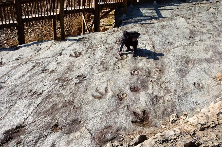 서유리 공룡화석지