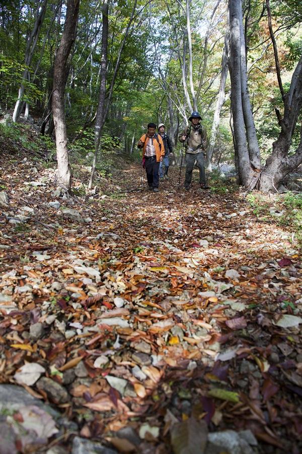 폭포가 끝나면 아늑한 숲길이 기다린다.