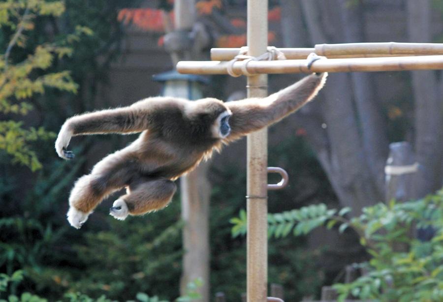 원숭이가 나무를 잡고 재주를 부리고 있다.