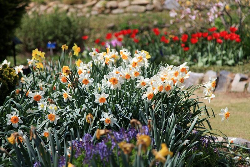 4월의 천리포수목원엔 온갖 꽃들로 만발한다.