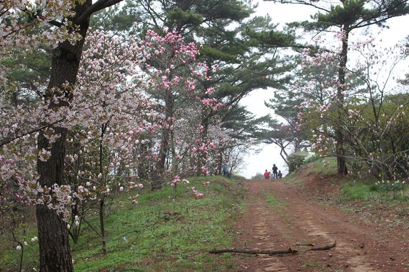 천리포수목원의 스카이라인에도 목련과 수선화 등 각종 꽃들이 만발해 있다.
