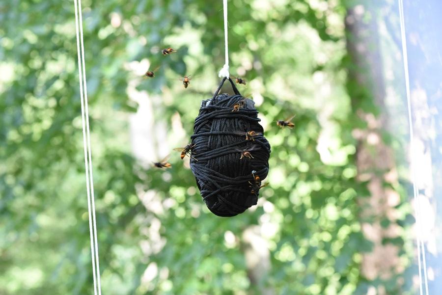 특히 검은색에 많은 말벌들이 달려들었다.
