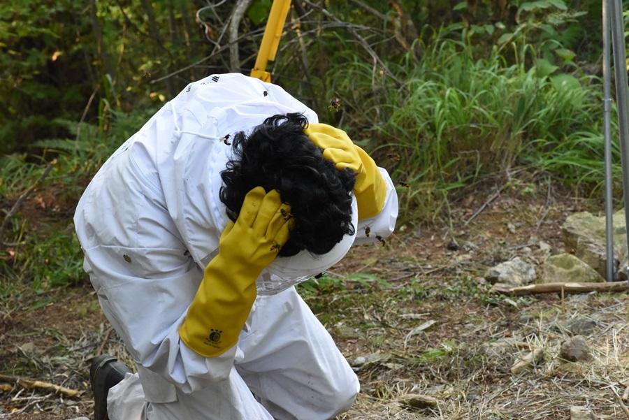 벌집을 건드렸을 경우 그 자리에 앉으면 더 많은 벌들이 공격한다.