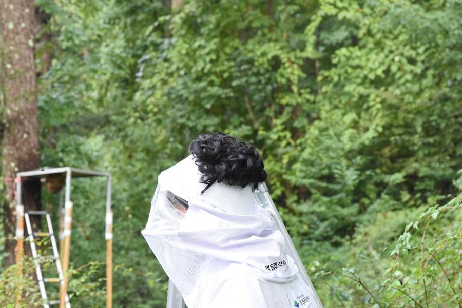 벌집을 건드리고 15미터 이상 줄행랑을 했을 경우엔 벌들이 거의 쫓아오지 않았다.