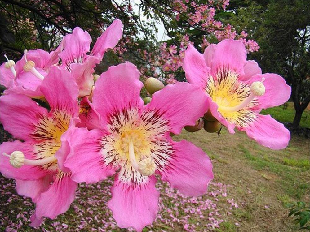 미인수 꽃