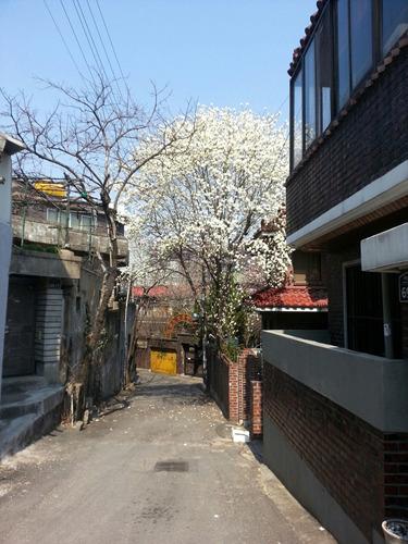 골목길(봄)