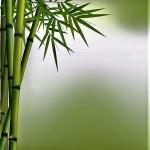 Zen bamboo 1-2